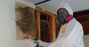 Mold Damage Restoration Technician Doing Wall Removal