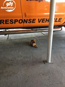 911 Restoration Pup At The Office